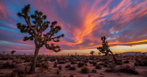 Support Joshua Tree National Park, One of California's Gems